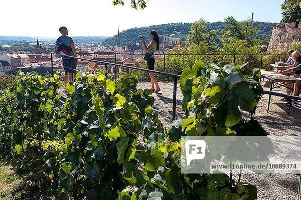 Prag Hauptstadt Europa Palast Schloß Schlösser Tschechische Republik Tschechien anpflanzen Weinberg