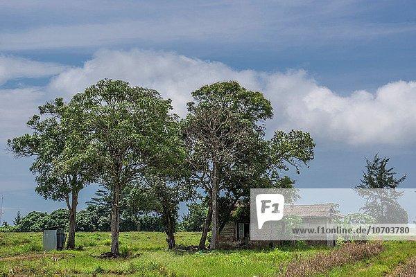 Strand Kokosnuss Plantage Malaysia Sarawak