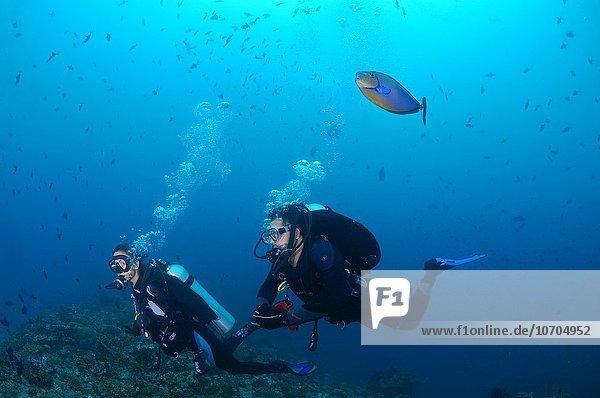 Woman diver swims near coral reef  elongated unicornfish (Naso lopezi) floats above her head and her sopravazhdaya glatat bubbles  Indian Ocean  Maldives.