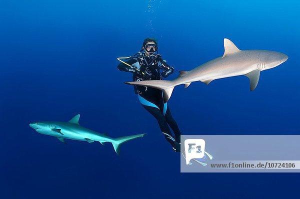 Grauer Riffhai Graue Riffhaie Carcharhinus amblyrhynchos junge Frau junge Frauen Wasser hängen 2 Malediven Indischer Ozean Indik