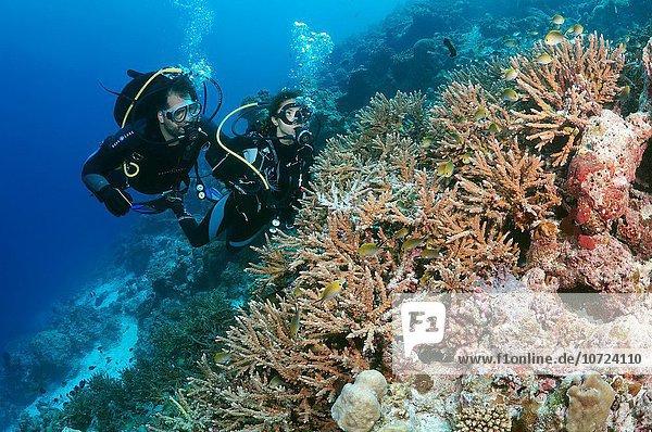 sehen jung Taucher Malediven Indischer Ozean Indik