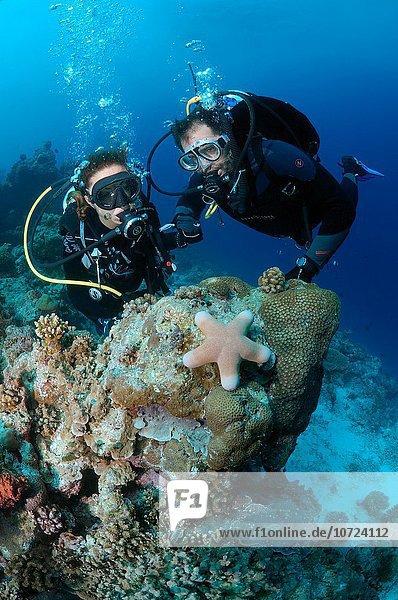 sternförmig, Meer, jung, sehen, Taucher, Malediven, Indischer Ozean, Indik