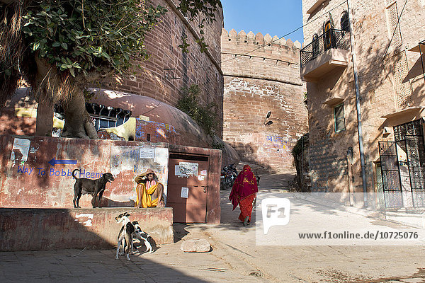 India  Rajasthan  Jodhpur  daily life