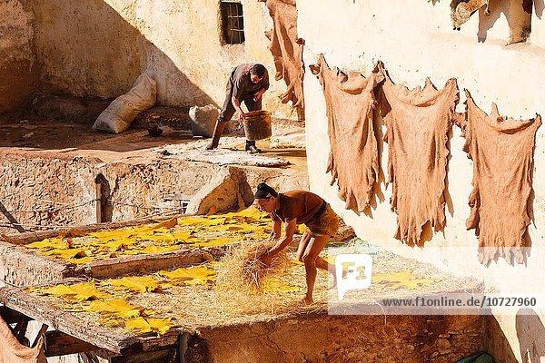 Nordafrika Fès Fez Mann arbeiten Fes Leder Marokko