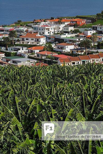 Stadt Ansicht Erhöhte Ansicht Aufsicht heben Kanaren Kanarische Inseln Spanien Teneriffa