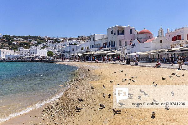 Greece. Cyclades Islands. Mykonos town  pigeon on the beach