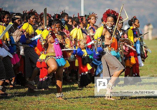 hoch oben Frau Tag Fest festlich geselliges Beisammensein ehrbar tanzen Zeremonie lang langes langer lange jung Königin Mutter - Mensch 100 8 Schilf Swasiland