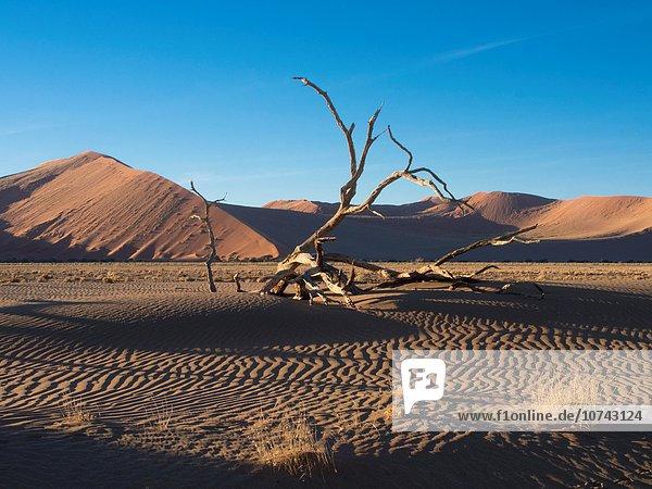 Namibia  Sossusvlei Dunes  Dead tree in desert
