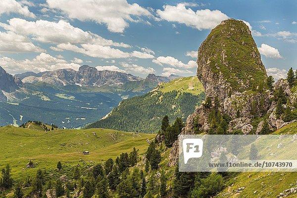 Baum über Ansicht Dolomiten Fichte Italien Grödnertal