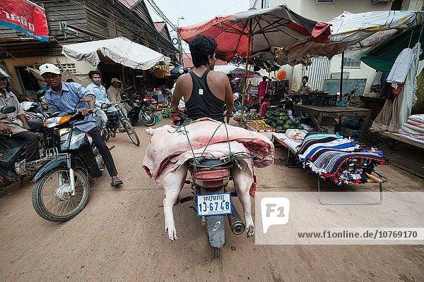 Kambodscha Schwein Siem Reap