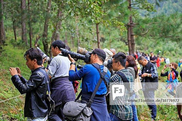 Tourist Fotograf China Asien Affe Yunnan