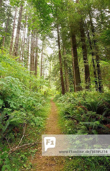 A hiking trail in Del Norte State Park  Redwoods  California  USA.