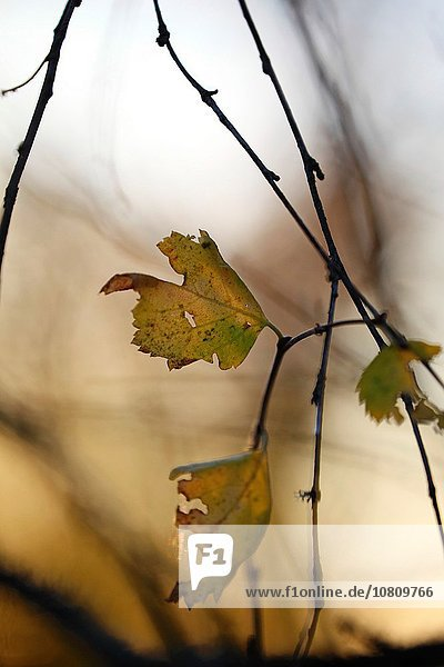 Farbaufnahme Farbe beleuchtet Fotografie Morgen Close-up Herbst Sonne
