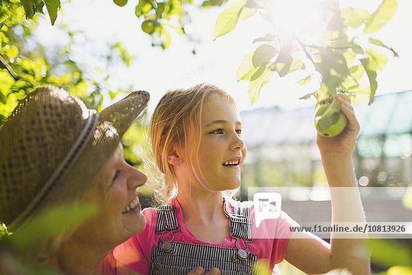 Großmutter und Enkelin pflücken Apfel vom Baum im sonnigen Garten