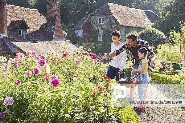 Familie pflückt Blumen im sonnigen Garten