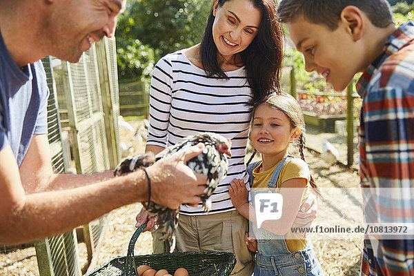 Familie erntet frische Eier vom Huhn