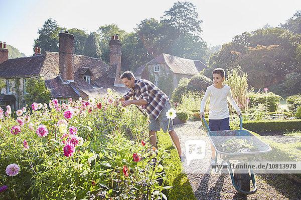 Vater und Sohn Gartenarbeit im sonnigen Blumengarten