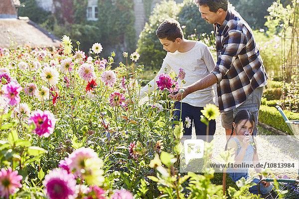Vater und Sohn pflücken Blumen im sonnigen Garten