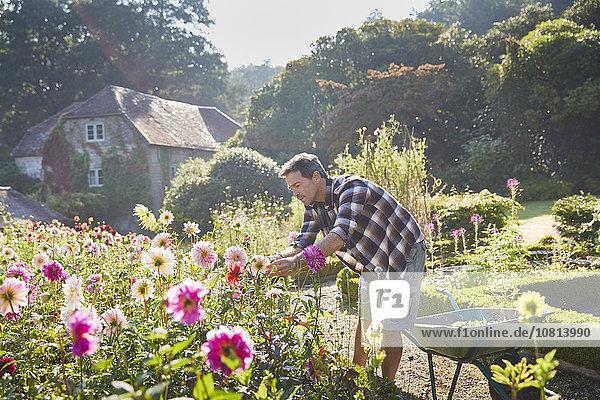 Mann beschneidet Blumen im sonnigen Garten