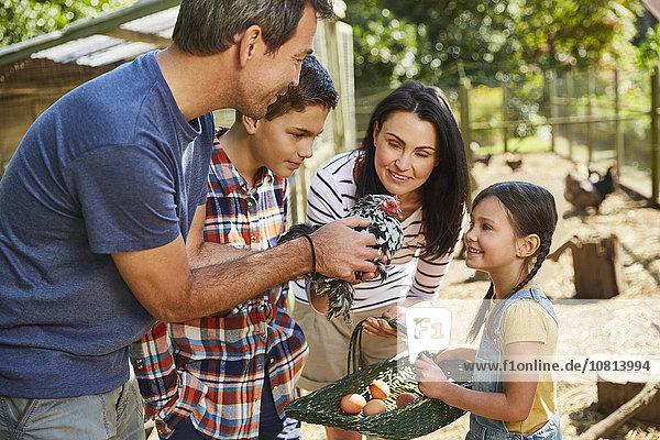 Familie ernten frische Eier von Hühnern außerhalb des Stalles