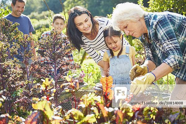 Mehrgenerationen-Familie im Gemüsegarten