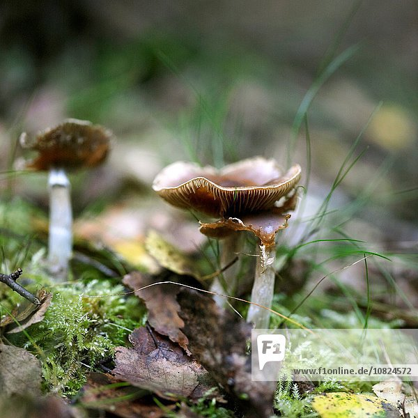Pilz auf herbstlichem Waldboden