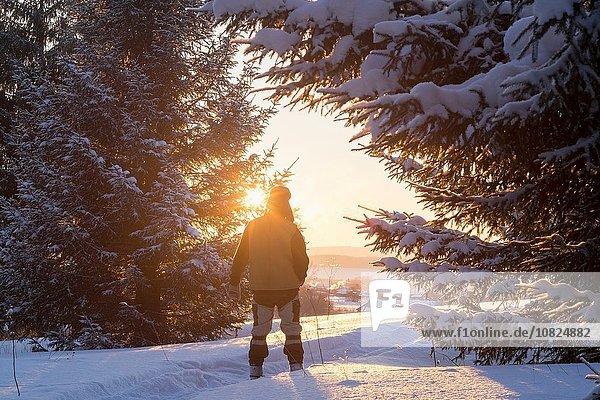 Rückansicht des männlichen Wanderers im sonnigen  schneebedeckten Wald  Ural  Russland