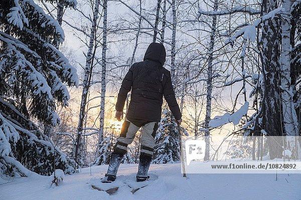 Rückansicht des Wanderers im verschneiten Wald  Ural  Russland