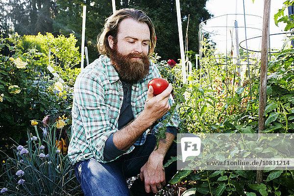 Europäer Mann Gemüse Garten aufheben