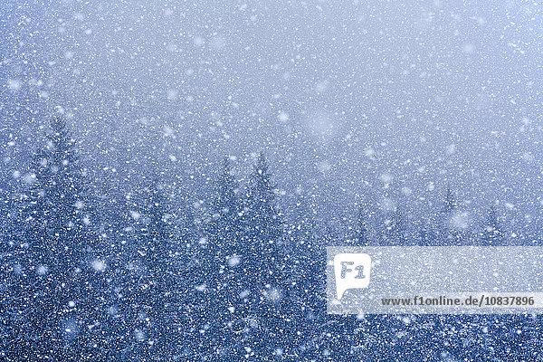 Schneeflocken über Bäumen