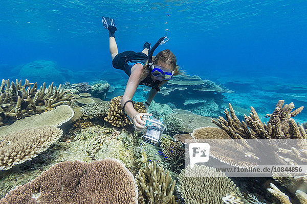 Snorkeler in underwater profusion of hard plate corals at Pulau Setaih Island,  Natuna Archipelago,  Indonesia,  Southeast Asia,  Asia