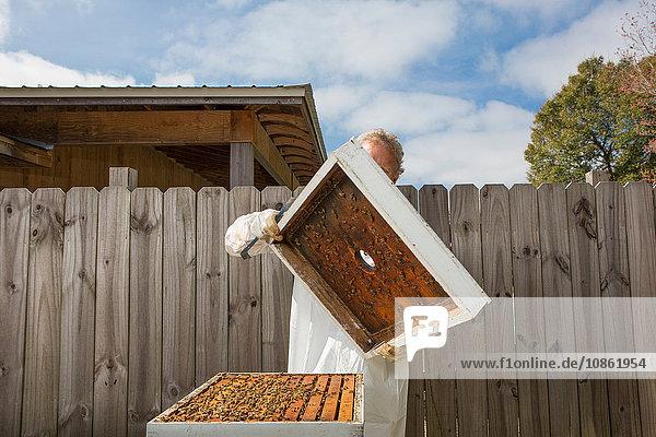 Mann entfernt Deckel vom Bienenstock