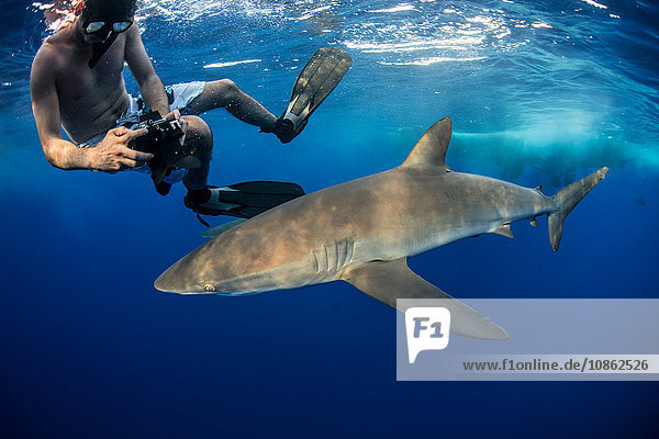 Snorkeler photographing a silky shark (Carcharhinus falciformis)  Roca Partida  Colima  Mexico