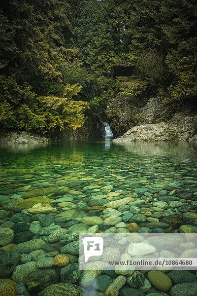 Felsiges Flussbett  Lynn Canyon Park  Nordvancouver  Britisch-Kolumbien  Kanada