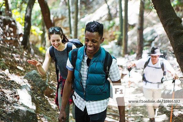 Three young adult hikers hiking up through woodland  Arcadia  California  USA