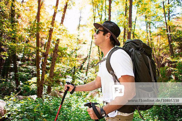 Junge männliche Wanderer wandern im Wald mit Wanderstöcken  Arcadia  Kalifornien  USA