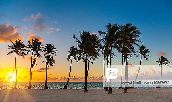 Reihe silhouettierter Palmen bei Sonnenuntergang  Dominikanische Republik  Karibik