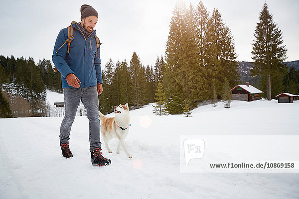 Young man walking husky in snow covered landscape  Elmau  Bavaria  Germany