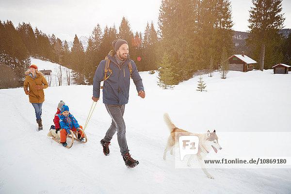 Parents with husky pulling sons on toboggan in snow covered landscape  Elmau  Bavaria  Germany