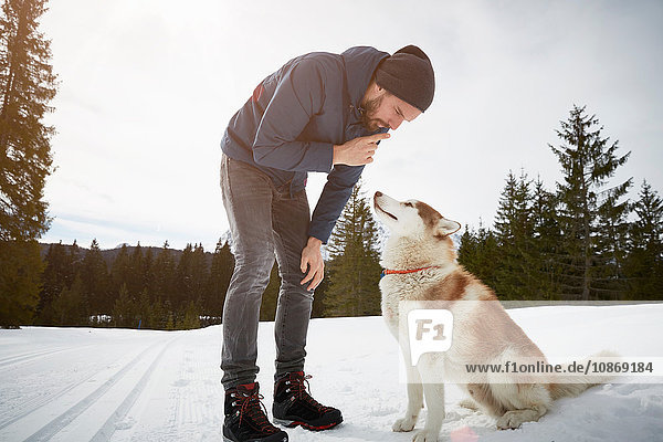 Young man training husky in snow covered landscape  Elmau  Bavaria  Germany