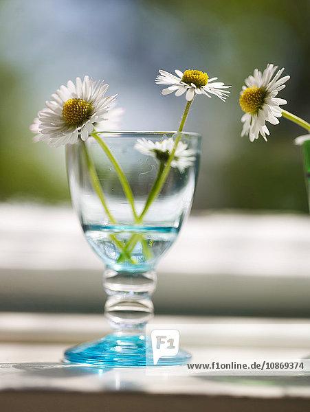 Weinglas mit Gänseblümchen auf der Fensterbank