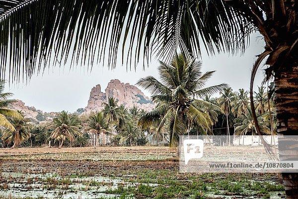 Felder in Hampi  Karnataka  Indien