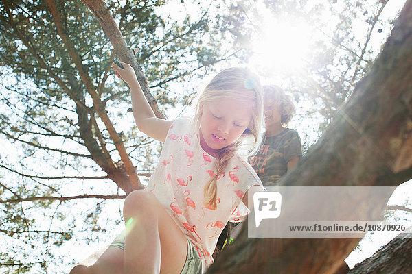 Junge und Mädchen klettern auf einen Baum Junge und Mädchen klettern auf einen Baum