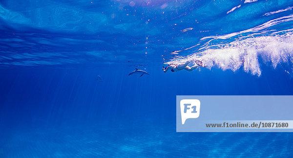 Taucher verfolgt Atlantischen Fleckendelphin über dem Meeresboden