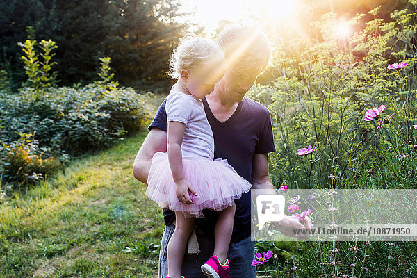 Father and daughter in rural setting  picking wild flowers