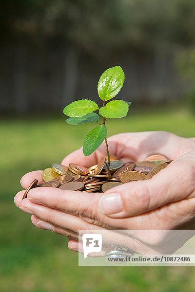 Seitenansicht von Frauen mit Schalenhänden  die einen aus Münzen wachsenden Baumsetzling halten