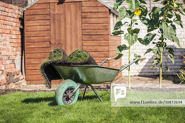 Rasen rollt in der Schubkarre auf dem Gartenrasen