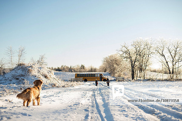 Golden retriever watching two young sisters walking to school bus on snow covered track  Ontario  Canada