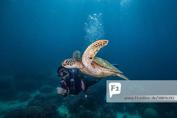 Junge Frau schwimmt mit seltener grüner Meeresschildkröte (Chelonia Mydas)  Moalboal  Cebu  Philippinen