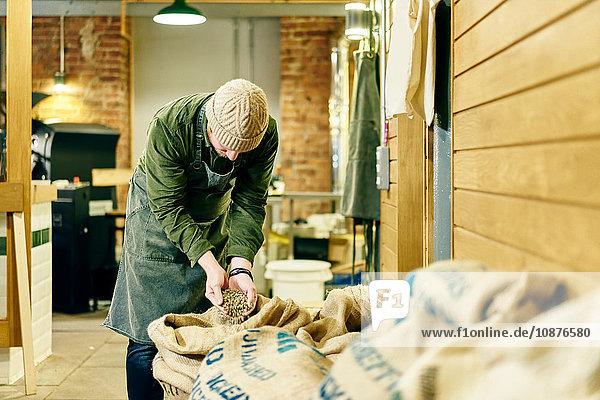Männlicher Kaffeehausbesitzer kontrolliert rohe Kaffeebohnen im Lagerraum